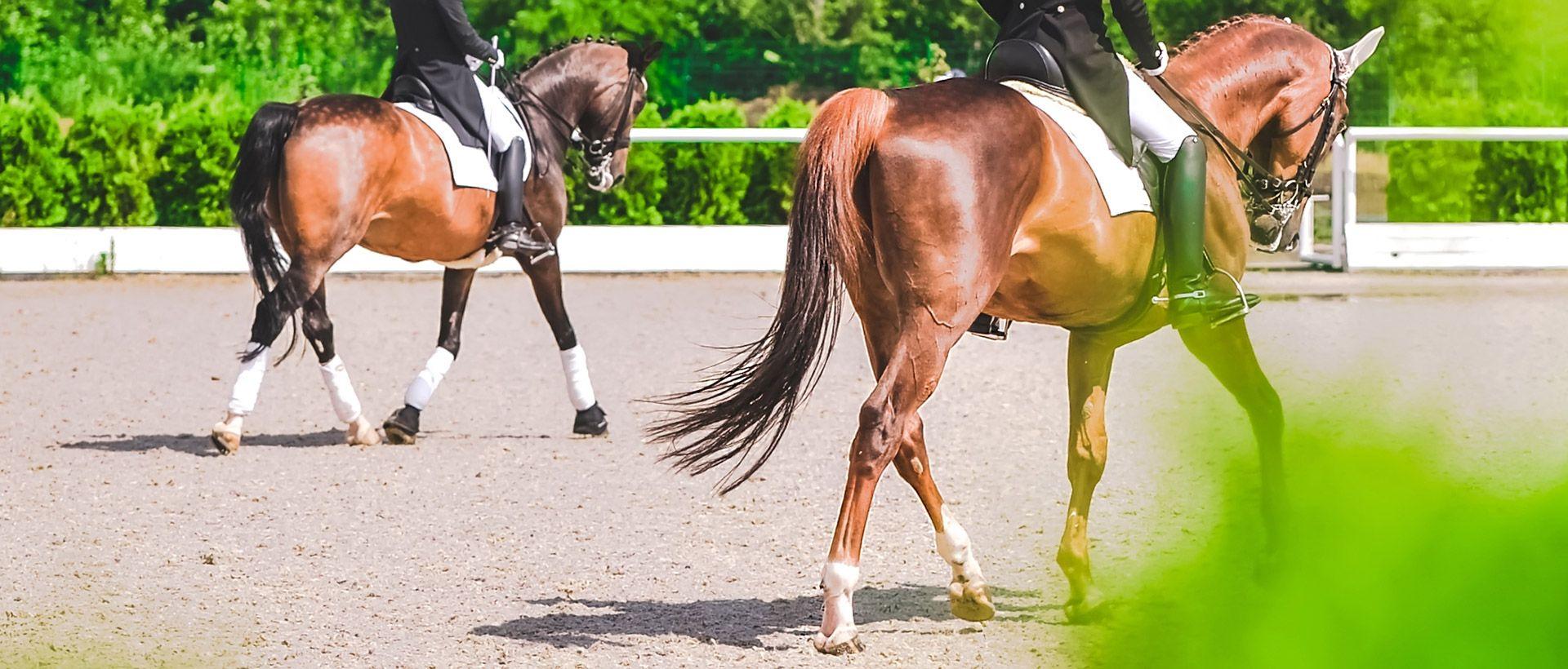 Camping Generali Open de France: paardensport in Lamotte-Beuvron