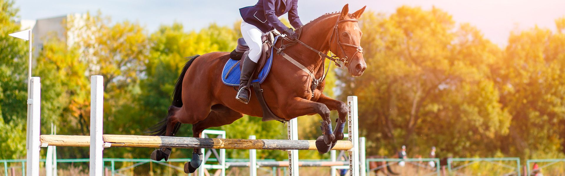 Camping Perros Jump equestrian competition