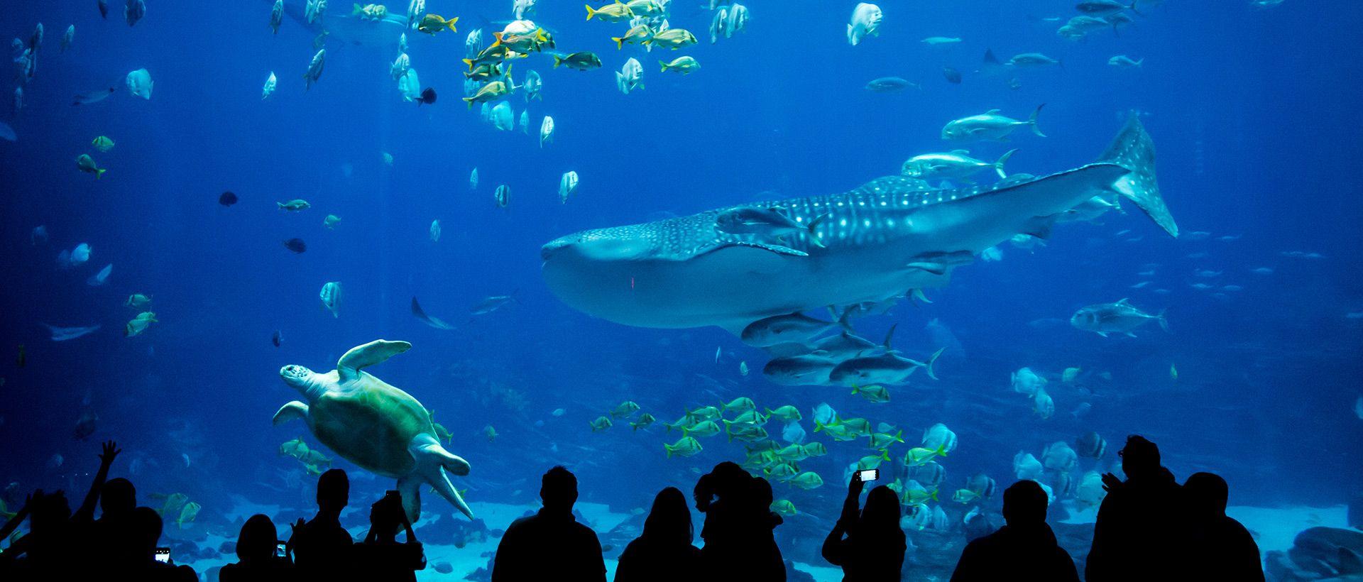 Camping Aquarium der Vendée