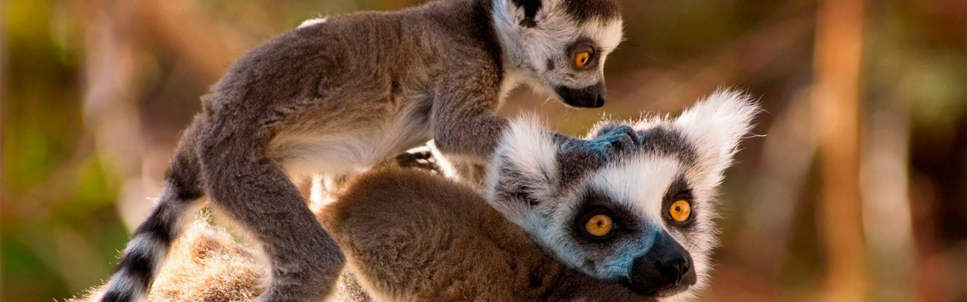 Camping Zoo de La Palmyre