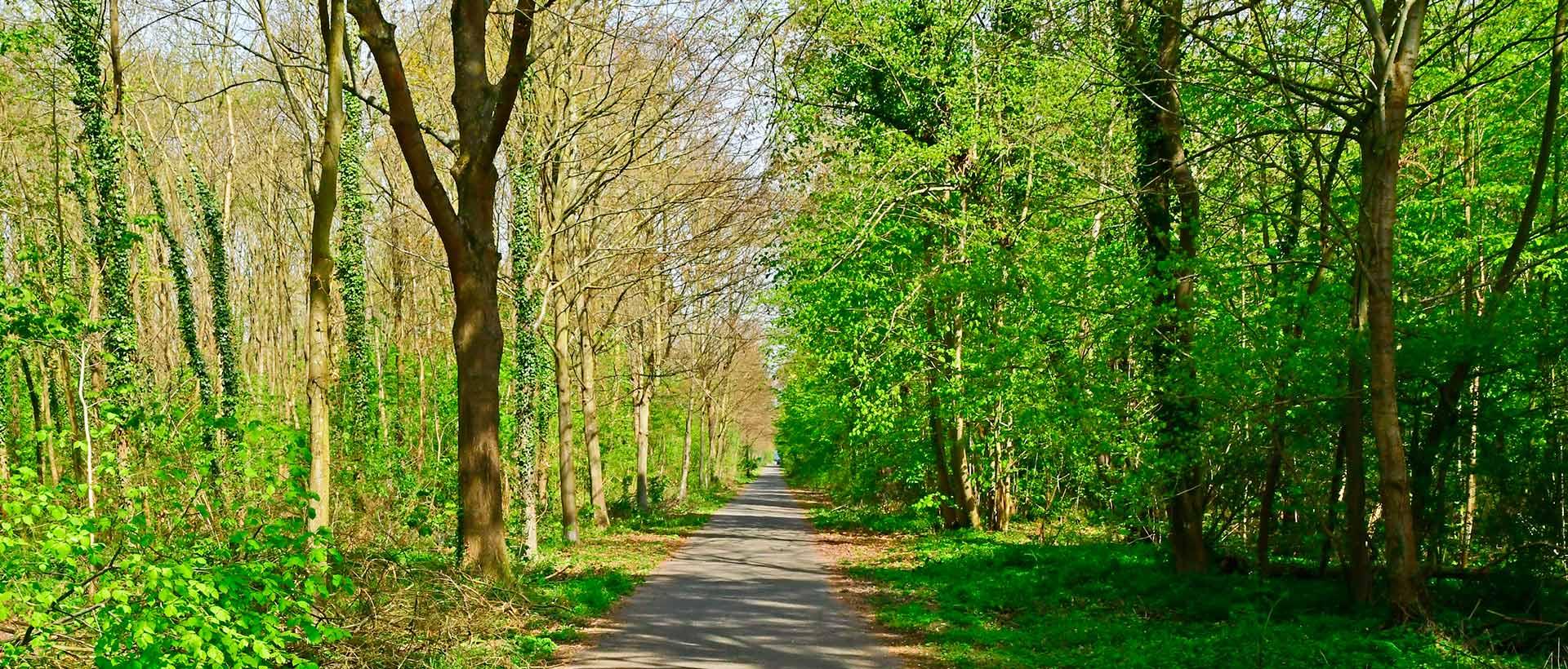 Forêt de Saint-Germain